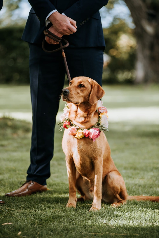 Alyssa & Matt - Colourful Hawke's Bay Garden Wedding | www.meredithlord.com